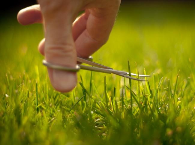 """Бензиновые самоходные газонокосилки. Не забывайте о правиле """"1/3"""" при скашивании газона: нельзя срезать более чем 1/3 высоты подросшей травы. На любовь и заботу хозяина газон обязательно ответит пышным здоровым видом!"""