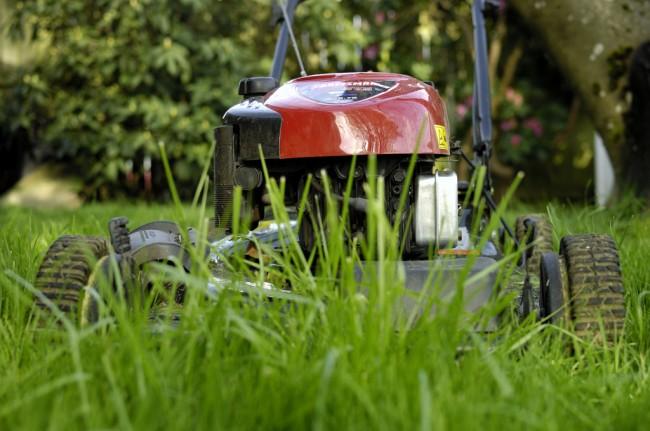 Бензиновые самоходные газонокосилки. Не надо излишне коротко стричь траву, если какой-то участок газона показался вам неаккуратным. Слишком короткое срезание приводит к ослаблению и уменьшению корней травы, и, в итоге, - к ухудшению ее вида