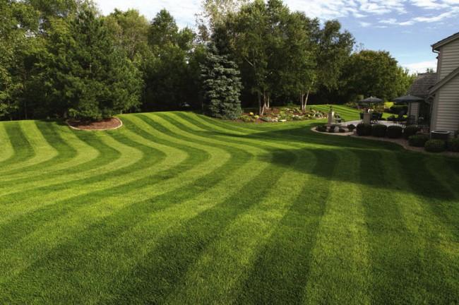 Бензиновые самоходные газонокосилки. Освоившись со впервые приобретенной газонокосилкой, вы сможете самостоятельно сделать свой газон настоящим произведением искусства
