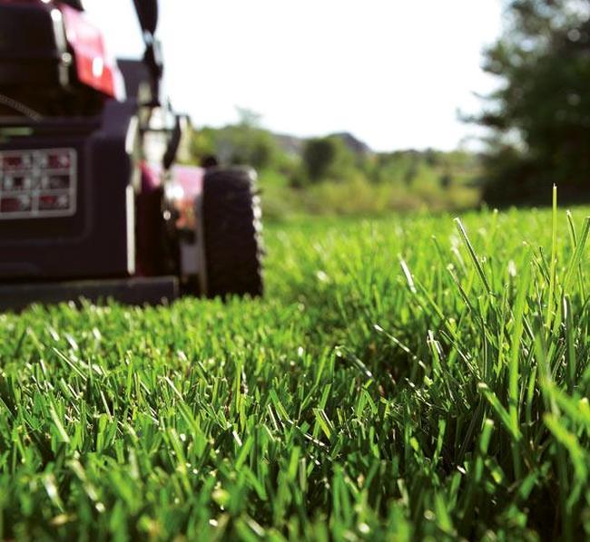 Бензиновые самоходные газонокосилки. Какая идеальная высота скашивания травы? Около 5 сантиметров, если вы досеиваете новую траву к уже растущей, и 7-8 сантиметров - для всех остальных случаев