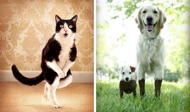 Пароочиститель - хороший помощник в борьбе с запахом и пятнами от домашних животных