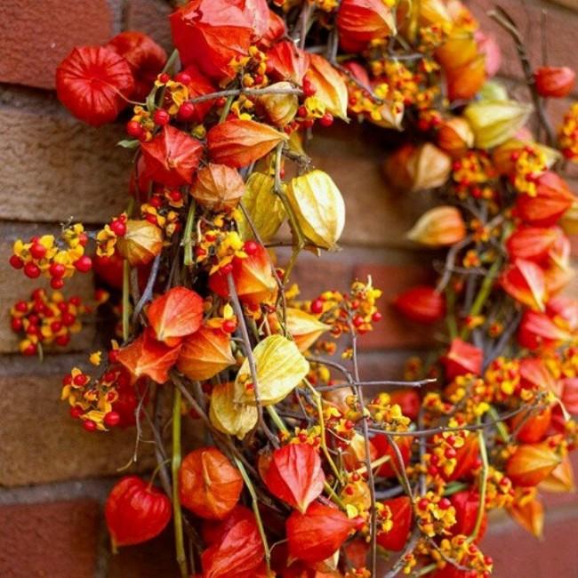 Физиалис служит атрибутом Рождественских праздников и Новогодних, наравне с елками и праздничными подарками