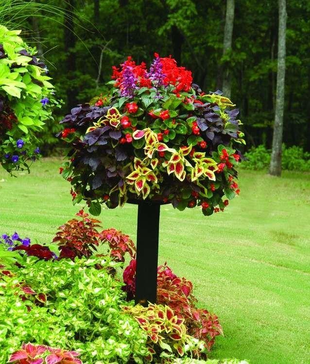 Среди огромного многообразия сортов колеуса, вы обязательно найдете несколько видов, которыми с удовольствием украсите свой сад и свой дом