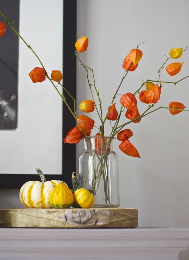 Способность сохранять форму и цвет на протяжении долгих месяцев делает физалис декоративный одним из самых удивительных растений
