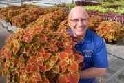 Фото 5 Колеус (54 фото): пестрое растение для украшения дома и сада