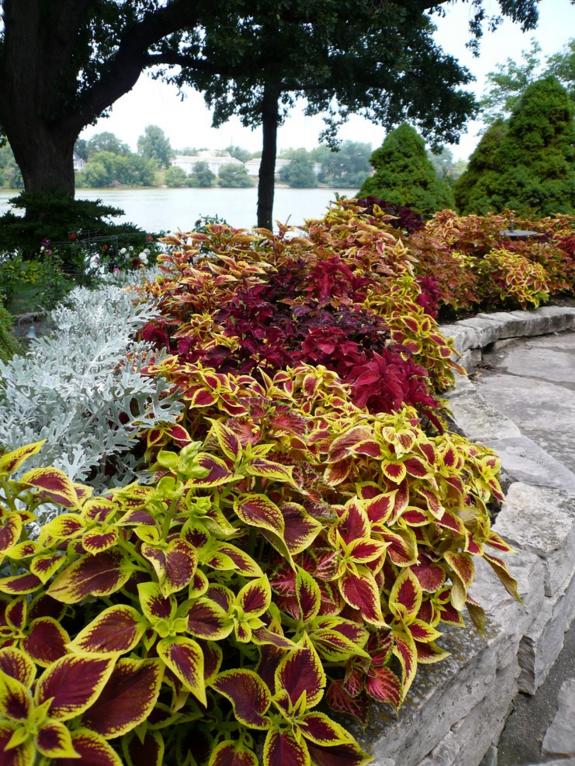Клумба, составленная из различных растений, будет выглядеть очень декоративно