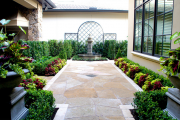 Фото 11 Колеус (54 фото): пестрое растение для украшения дома и сада