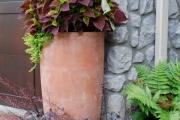 Фото 12 Колеус (54 фото): пестрое растение для украшения дома и сада