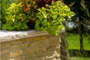Фото 9 Колеус (54 фото): пестрое растение для украшения дома и сада