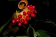 Фото 9 Диффенбахия (65 фото): виды, особенности ухода и способы размножения