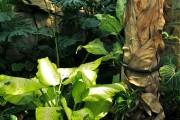 Фото 34 Диффенбахия (65 фото): виды, особенности ухода и способы размножения