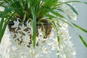 Фото 5 Хлорофитум (55 фото): полезное и пестрое комнатное растение