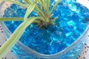 Фото 17 Хлорофитум (55 фото): полезное и пестрое комнатное растение