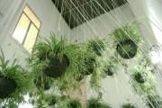 Фото 23 Хлорофитум (55 фото): полезное и пестрое комнатное растение
