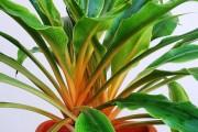 Фото 4 Хлорофитум (55 фото): полезное и пестрое комнатное растение
