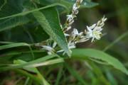 Фото 24 Хлорофитум (55 фото): полезное и пестрое комнатное растение