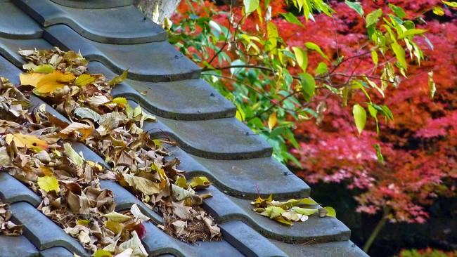Чем вывести плесень на стенах в квартире. Чтобы не появилась плесень в системах отвода дождевой воды, их следует периодически чистить от листьев