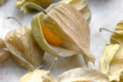 Фото 19 (90+ фото) Физалис — выращивание и грамотный уход