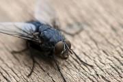 Фото 2 Избавляемся от мух в квартире: профилактика и народные методы