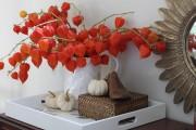 Фото 12 (90+ фото) Физалис — выращивание и грамотный уход