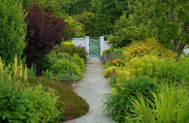 """Темная самодостаточная тяжеловесная окраска сорта """"Diabolo"""" заставляет внимательно выбирать площадь его посадки, так как его обилие даст саду излишне драматичный вид"""
