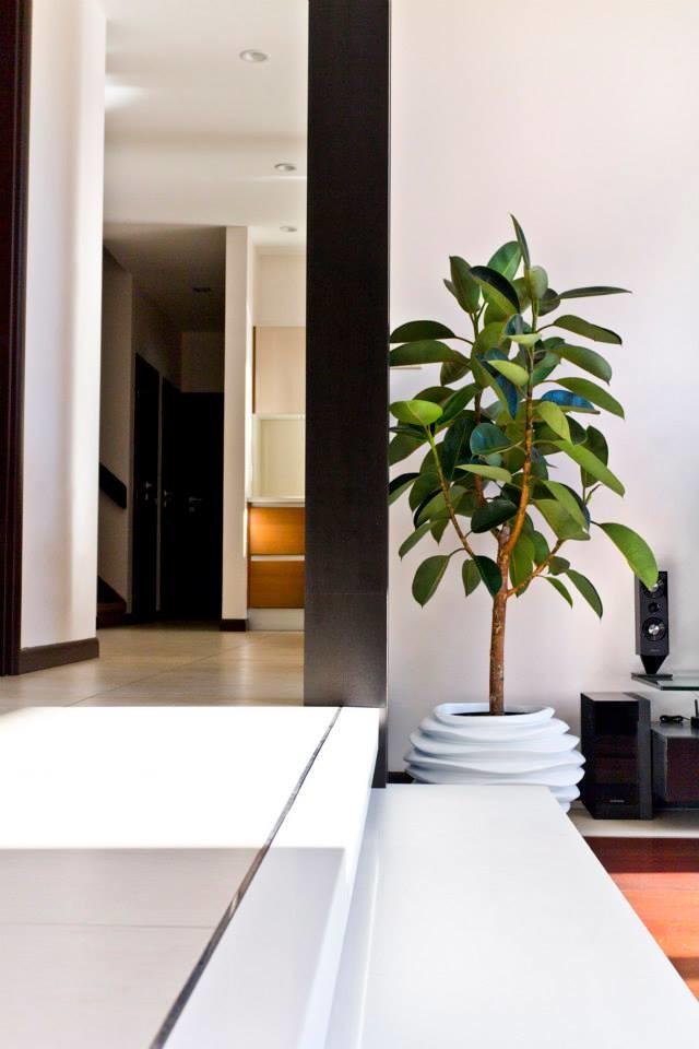 Фикусы разновидности с фото и названиями. Фикус бенгальский (Ficus benghalensis) – вид вечнозелёных деревьев из семейства Тутовыепришедший к нам из влажных лесов Индии, Таиланда, Бирмы и ряда других стран Юго-Восточной Азии