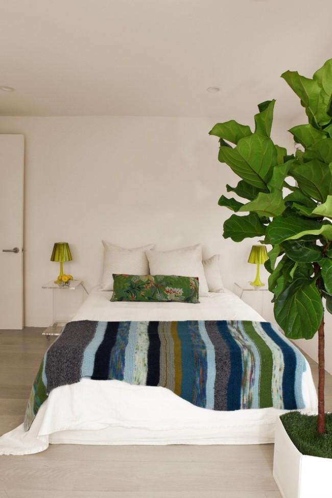 Фикусы разновидности с фото и названиями. Если вы держите лировидный фикус в жилой комнате или спальне - позаботьтесь о достаточном увлажнении воздуха