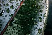 Фото 9 Фикусы (60+ фото видов с названиями): уход в домашних условиях — советы опытных цветоводов