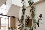 Фото 5 Фикусы (60+ фото видов с названиями): уход в домашних условиях — советы опытных цветоводов