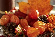 Фото 10 55+ фото Физалис — выращивание и грамотный уход