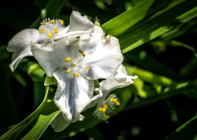 Прямое солнце, как и для всех растений, не желательно, под его воздействием листья могут получить ожог