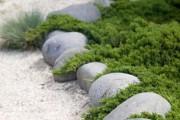 Фото 28 65 идей использования ели в ландшафтном дизайне: правила посадки и ухода