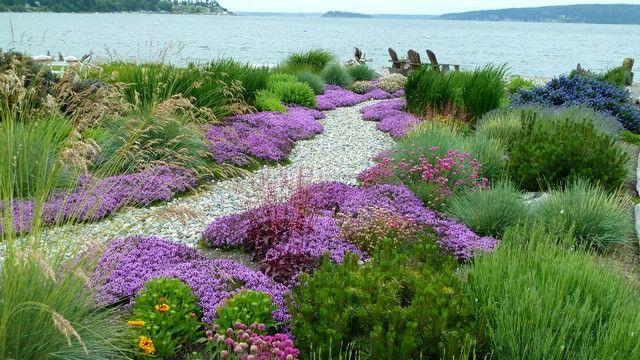 Карликовые хвои хорошо смотрятся с луговыми цветами