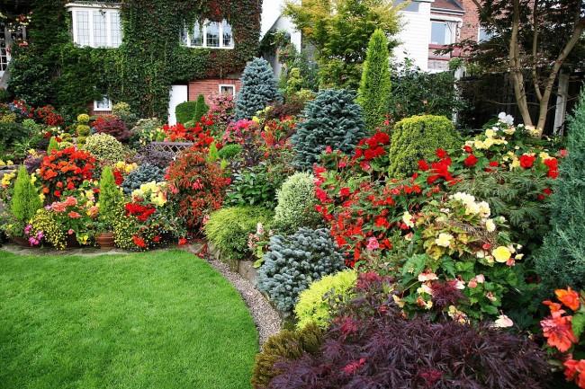 Хвойные деревья и кустарники удивительно гармонично приживаются среди других растений, заметно обогащая их внешний вид