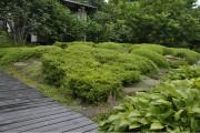 Фото 28 50+ идей хвойных деревьев в ландшафтном дизайне: фото, названия, способы размещения