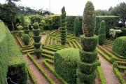 Фото 17 50+ идей хвойных деревьев в ландшафтном дизайне: фото, названия, способы размещения