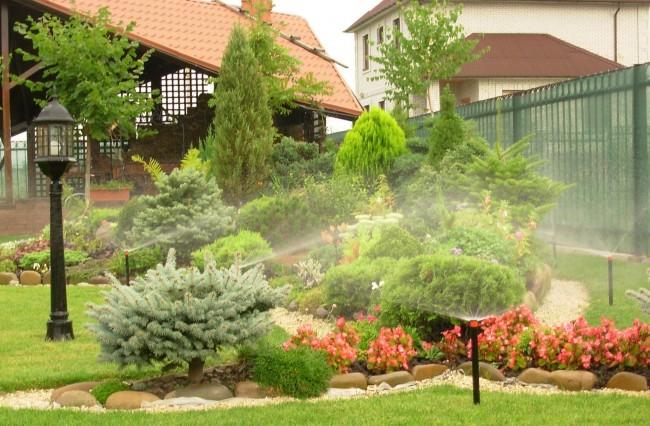 Хвойные деревья и кустарники могут длительное время обходится без полива