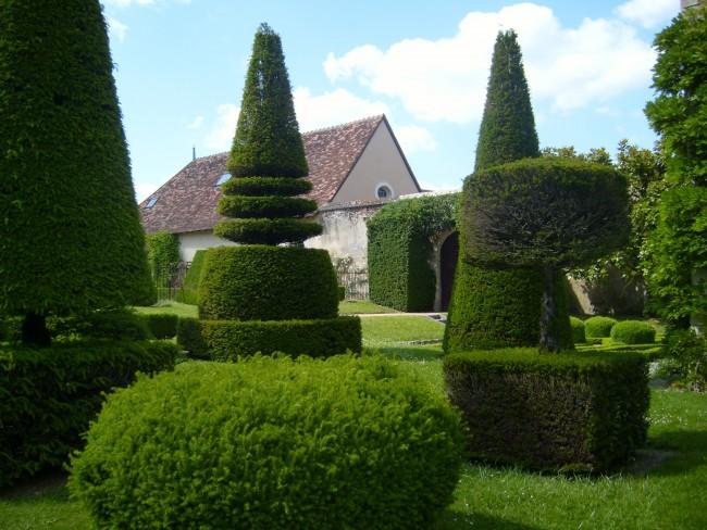 Хвойные деревья и кусты идеальный материал для фигурной стрижки, с помощью которой они приобретают геометрические и фантастические формы