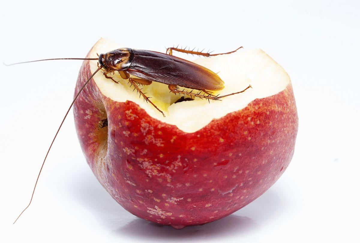 Избавиться от тараканов своими руками 29