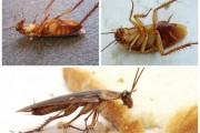 Фото 10 Как избавиться от тараканов в квартире навсегда: эффективные способы