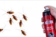 Фото 6 Как избавиться от тараканов в квартире навсегда: эффективные способы