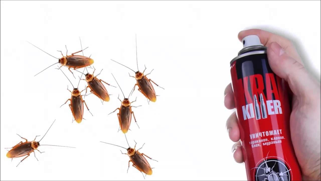 Чем уничтожить тараканов в квартире навсегда своими руками