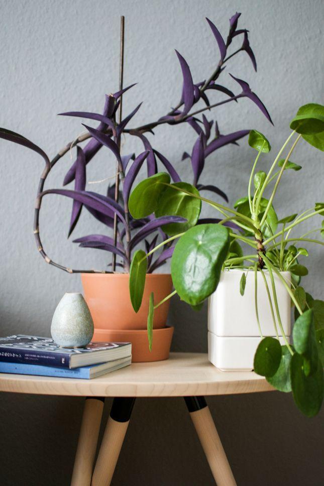 Традесканция: 50 фото лучших решений для декора комнаты или сада