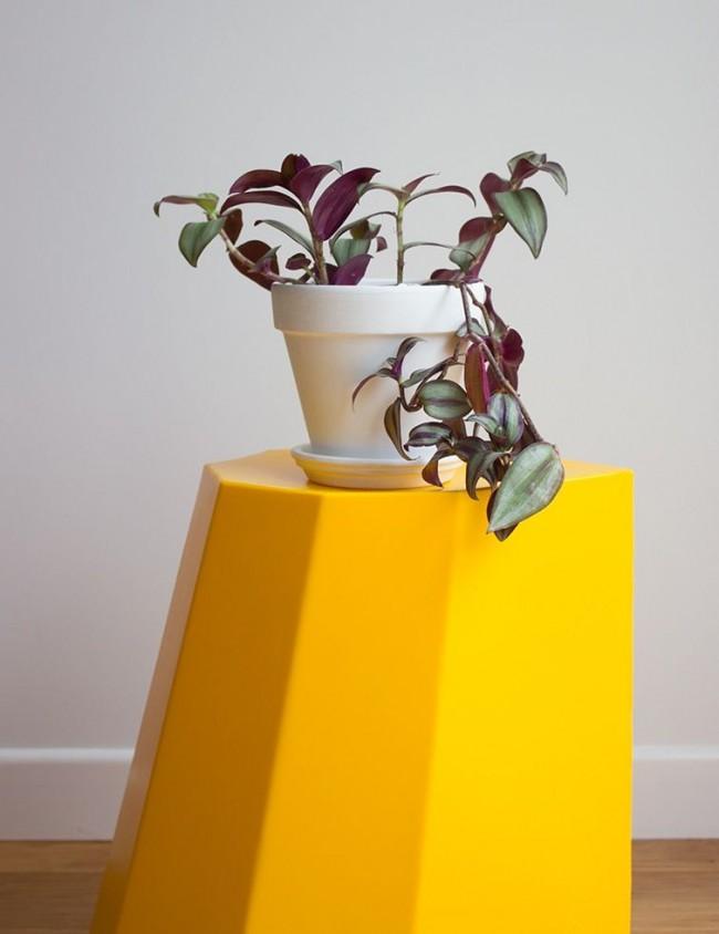 Традесканция комнатная не привередлива в уходе, однако, чтобы растение не теряло своей декоративности, необходимы некоторые условия