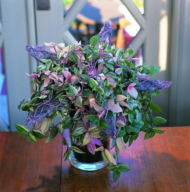 Цветок традесканция — это неизменный гость любой современной квартиры