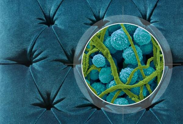 Пылесос с аквафильтром: какой фирмы лучше, цены, отзывы. Дом может сверкать чистотой, но самые мелкие частицы грязи остаются даже после тщательной уборки пылесосом, на что незамедлительно отреагируют аллергики. На фото: имеющиеся в воздухе каждого дома споры черной плесени под микроскопом