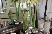 Фото 18 Амариллис: цветущая роскошь на вашем подоконнике