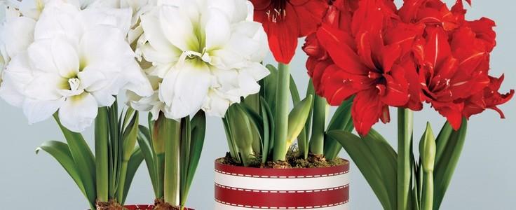 Комнатные цветы и растения - Фотостатьи