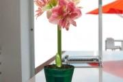 Фото 22 Амариллис: цветущая роскошь на вашем подоконнике