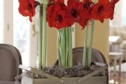 Фото 11 Амариллис: цветущая роскошь на вашем подоконнике